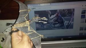 Pterosaur Toy