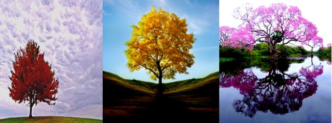 Trees by hancreech