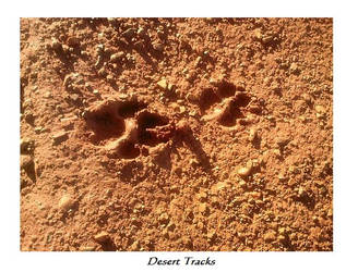 Desert Tracks by Brandrvael