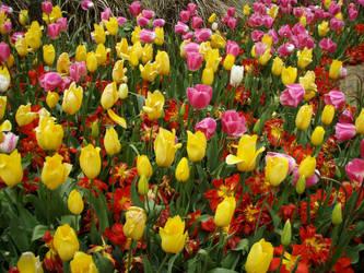 Spring at Araluen by Brandrvael