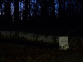 A dark book in the dark woods by BellaGBear