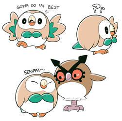 A Popular Owl