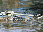 Mechanic Crocodile by Noker666