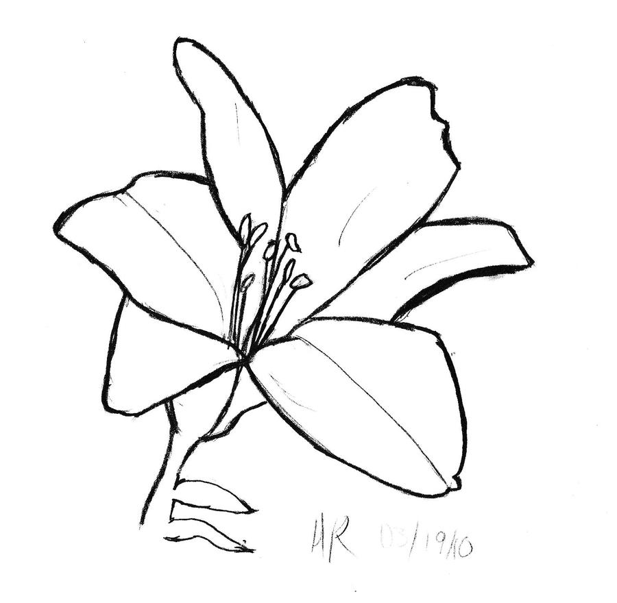 Lily Tattoo Line Drawing : Pin mucha lily tattoo tim beck art nouveau freedom ink tat
