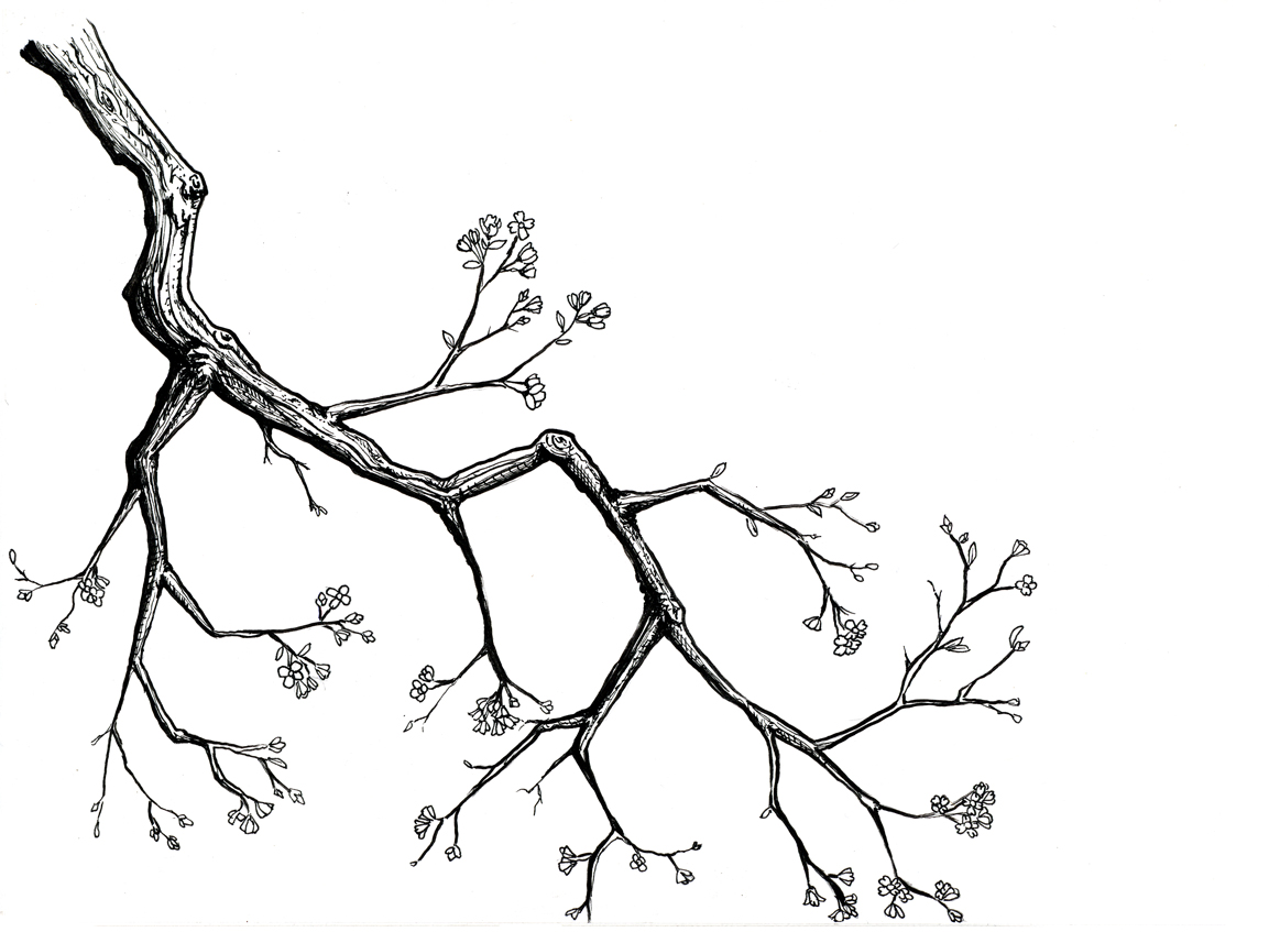 Cherry Blossom Drawing Black And White Cherry Blossom Drawing