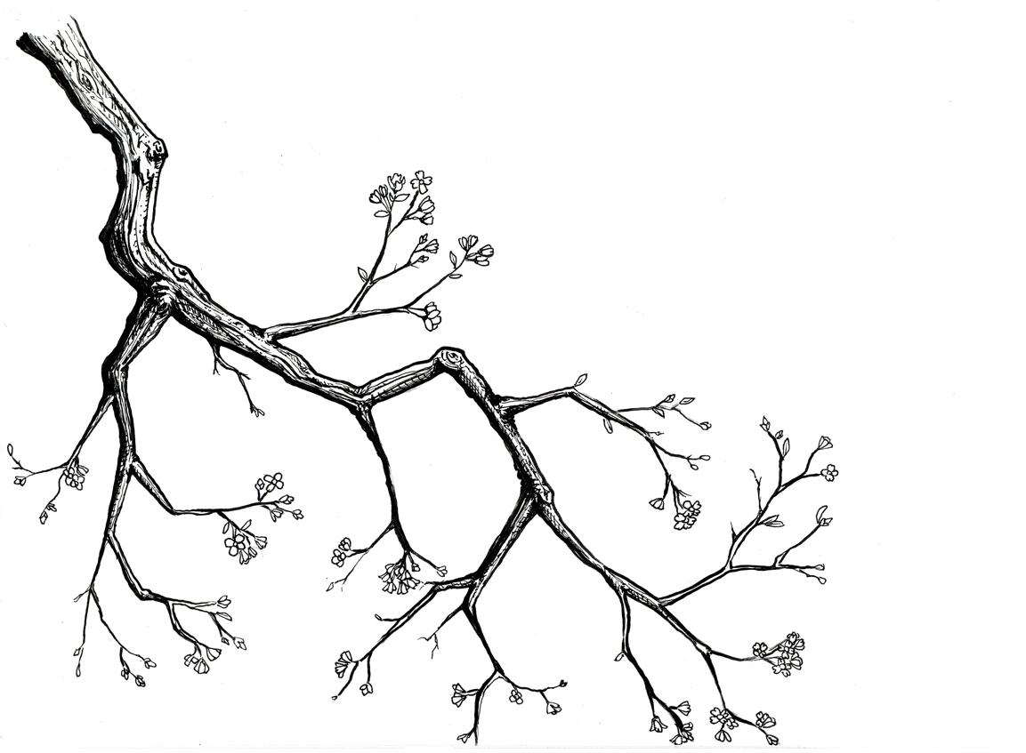 Cherry Blossoms by Jor3l on DeviantArt