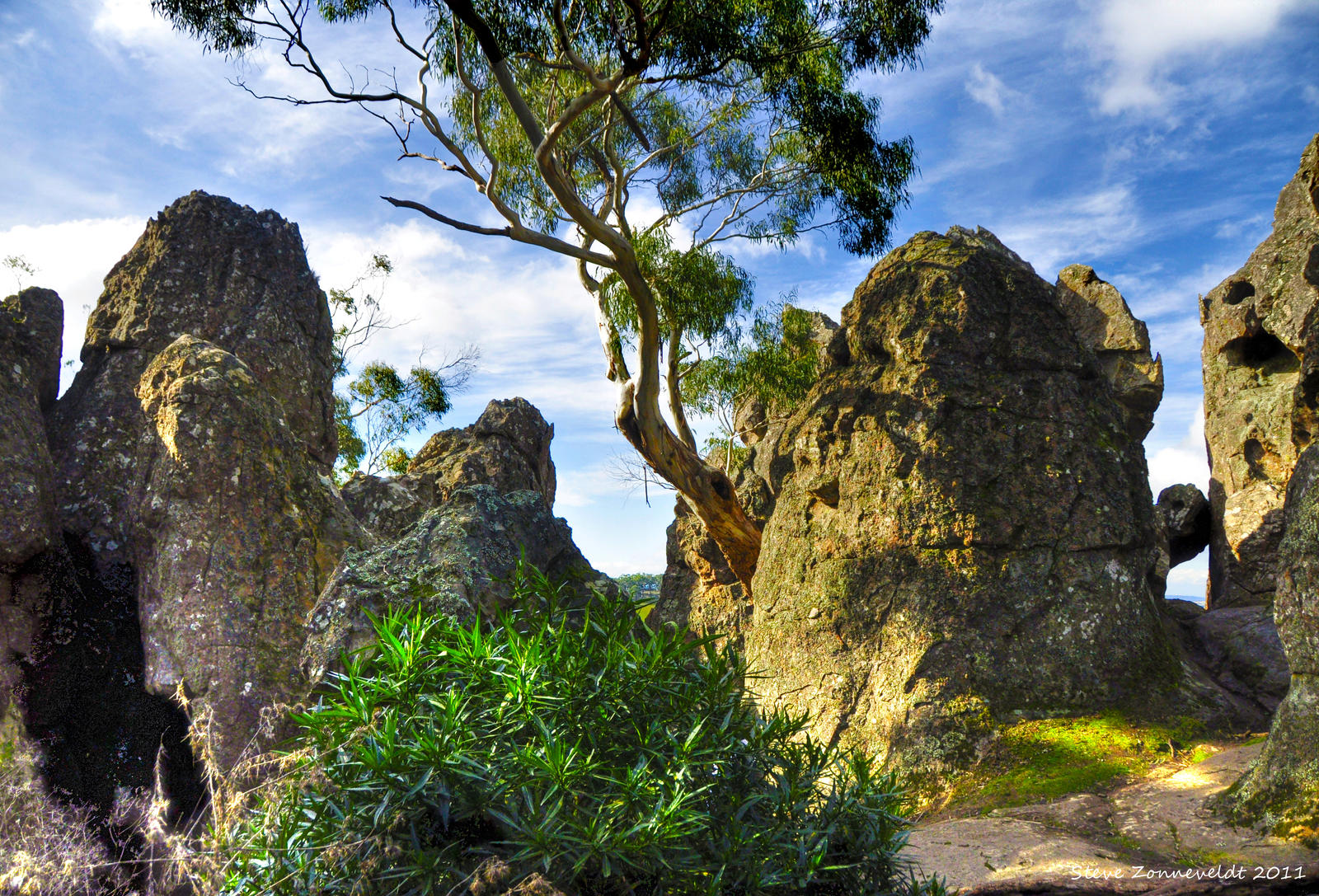 [Image: tree_growing_through_rocks_by_djzontheba...X9Or2PQtJQ]