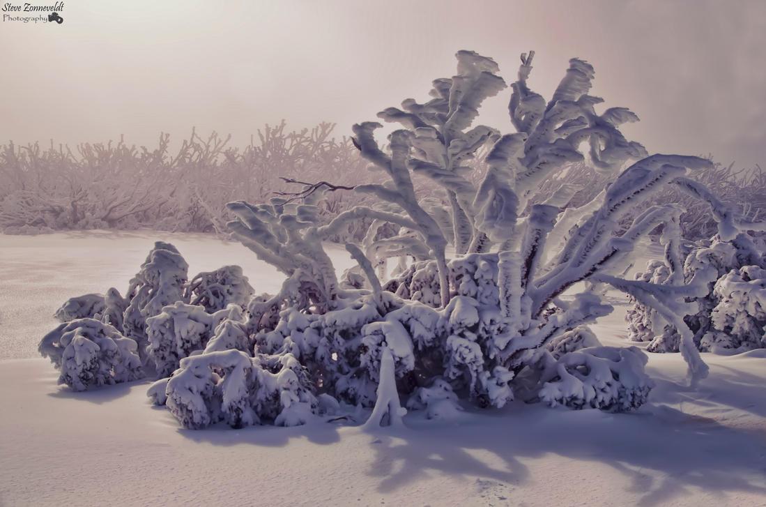 Snow On Trees by djzontheball
