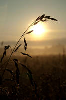 Dawn by Day-zel
