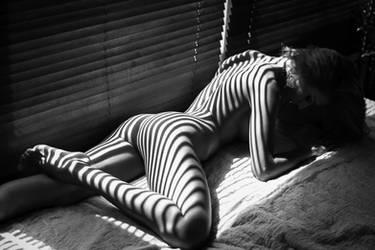 Zebra by Day-zel