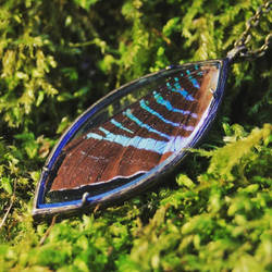Butterfly wing pendant - Face 1 by Curionomicon