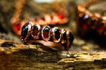 Vampire fangs ring by Curionomicon
