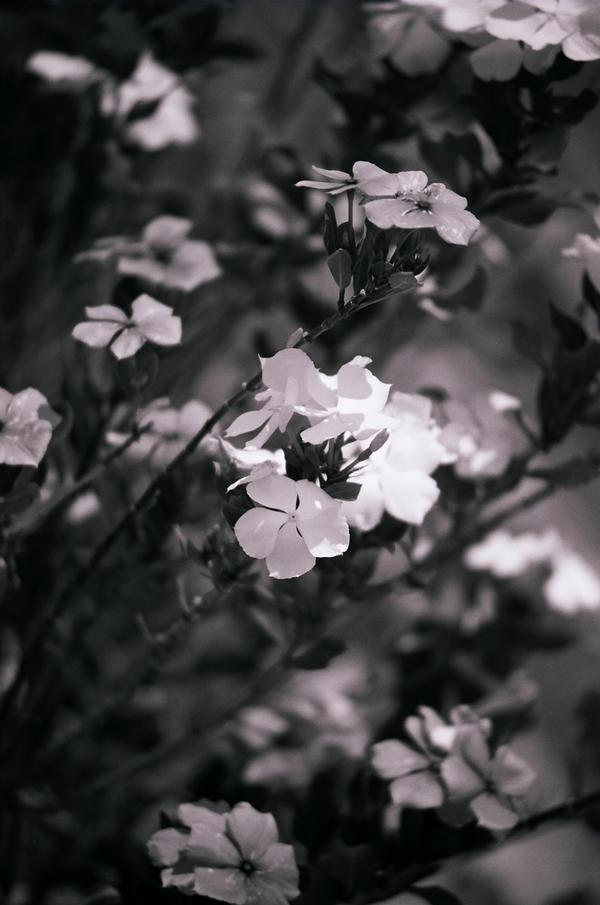 Flowers by Saltycroc