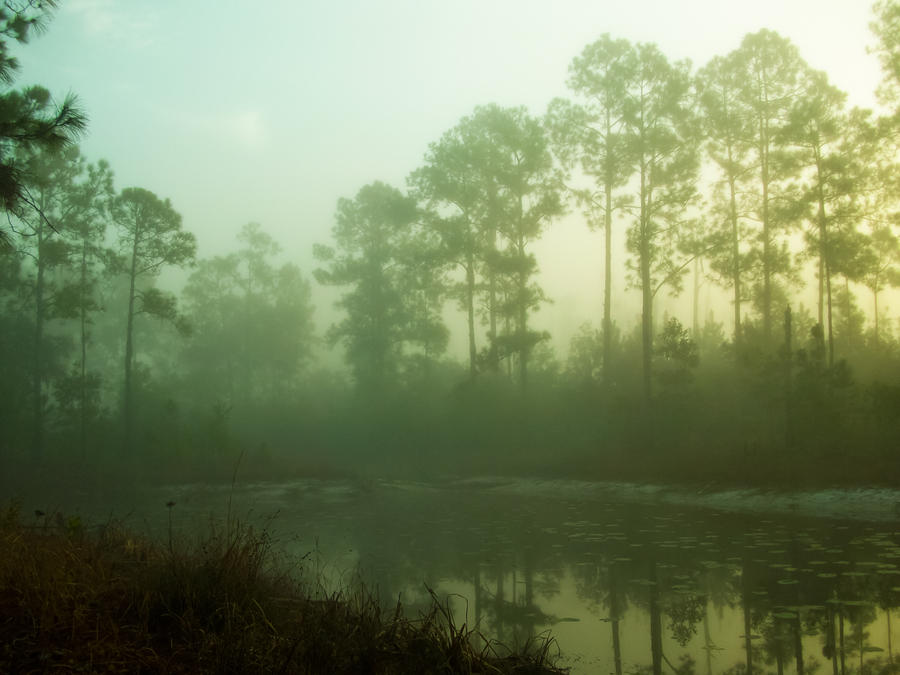 Foggy lake by Grayfreak0