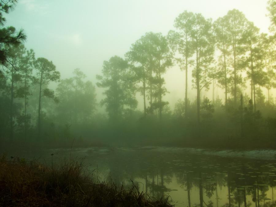 Foggy lake by Grayfreak0