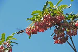Wasp Landing on Tree
