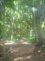 Dreamy Jungle Path by MogieG123