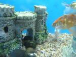 A Goldfish's Castle