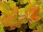 Rain-soaked Autumn Leaves 2