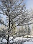 One Snowy Tree