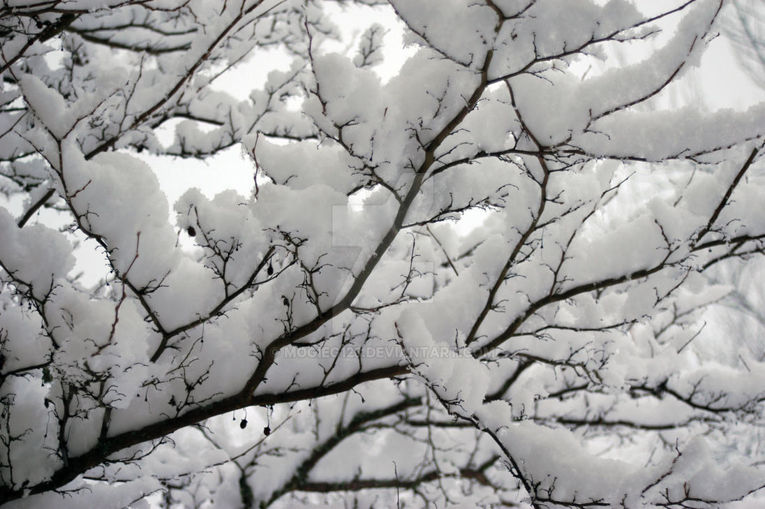 Snow on Branches by MogieG123