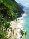 Beach Through the Palms