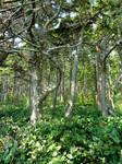 A Magical Coastal Forest