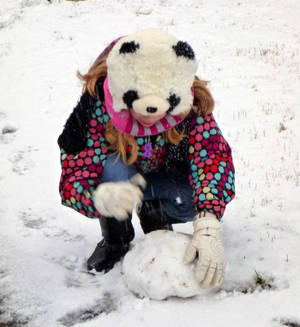A Panda with a Snowball