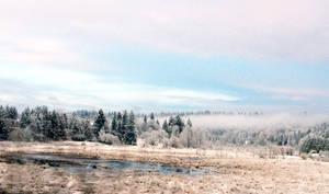 Foggy Winter Pond
