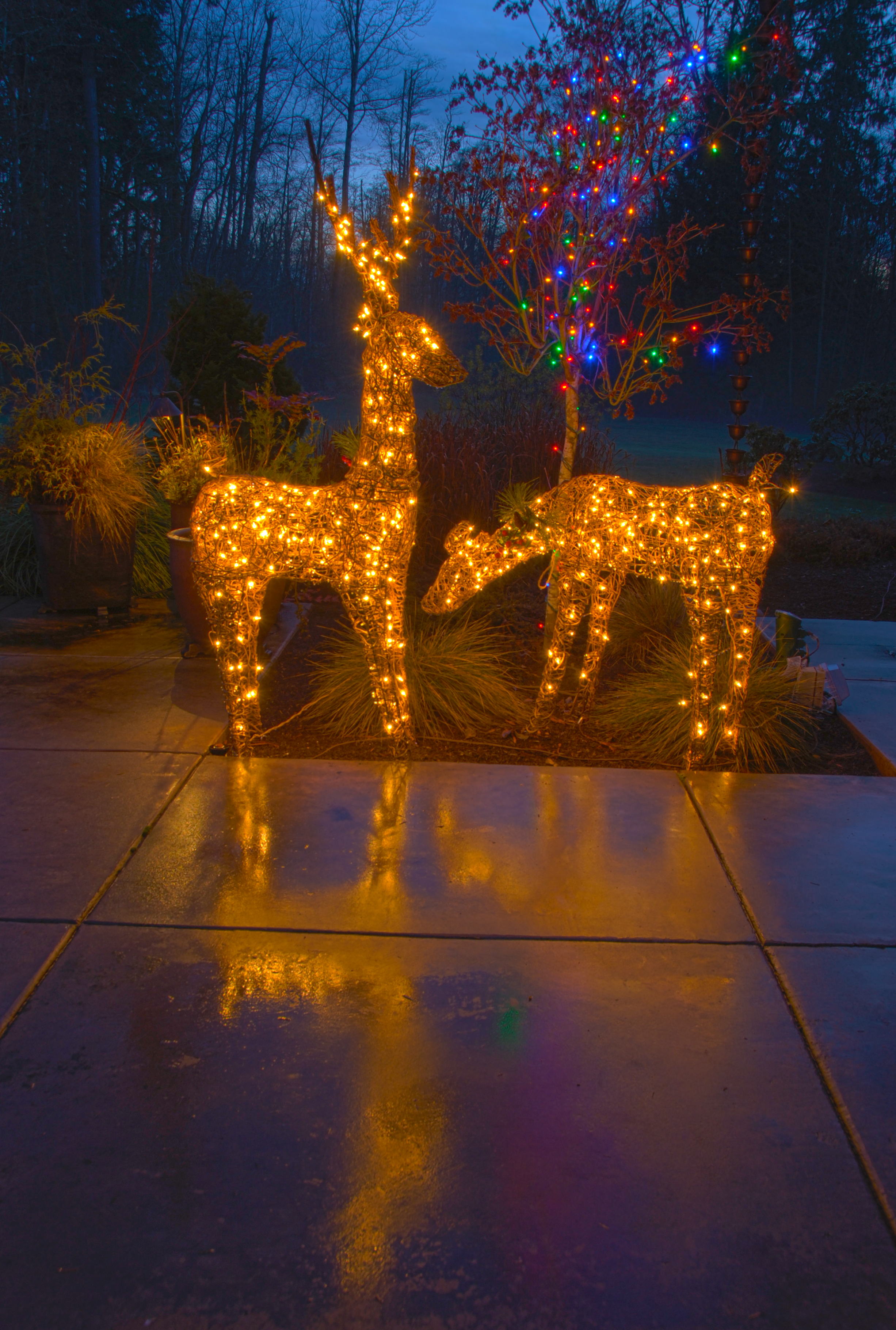 Lighted Deer by MogieG123