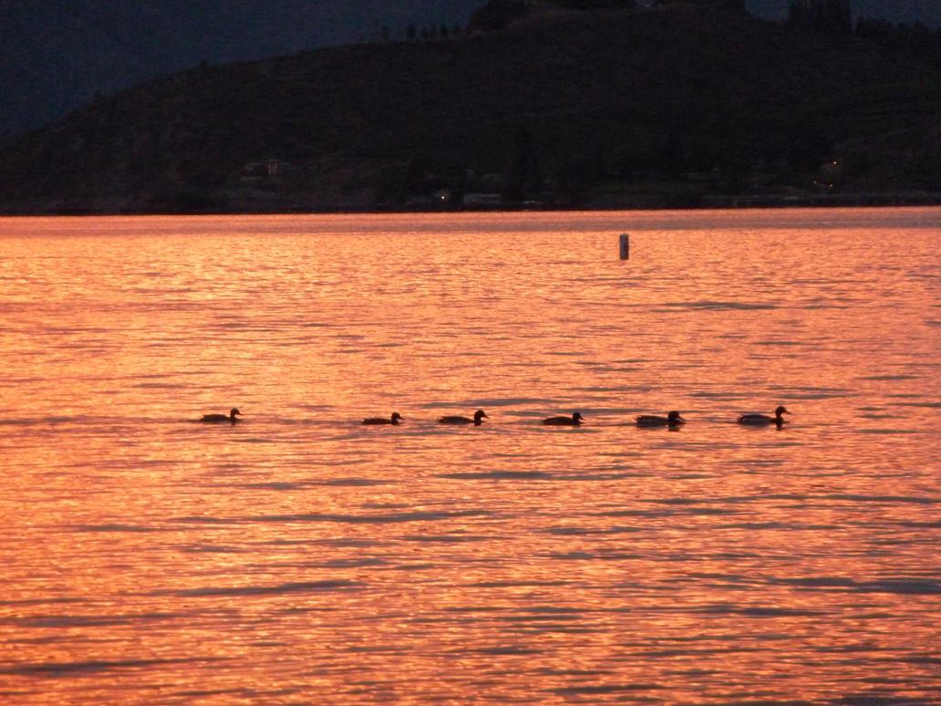 Ducks in a Row by MogieG123
