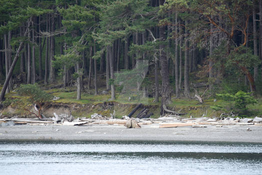 Forest next to the beach