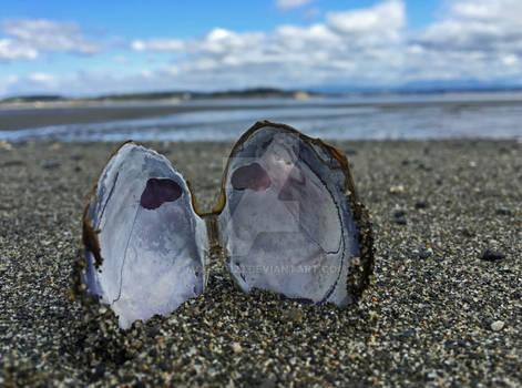 Clam Shell On Camano