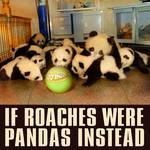 if roaches were pandas instead