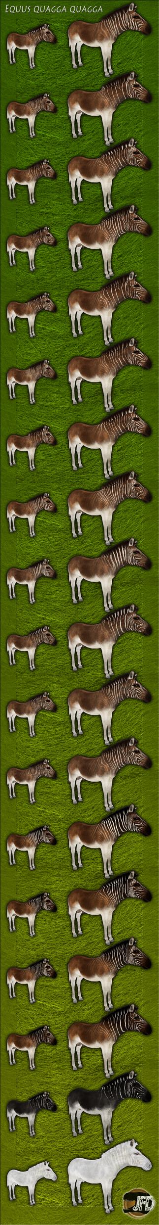Equus quagga quagga by MrGorsh