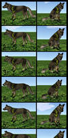Canine Texture Reference Final
