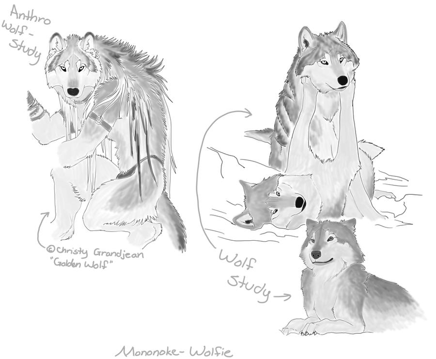 Anthro Wolf Wallpaper Wolf Anthro Wolf Study by