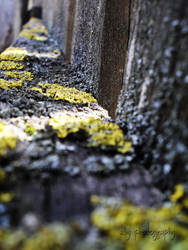 lichens by aby192