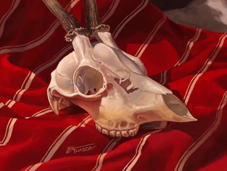 Skull Study [3DS]