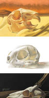 3DS Skulls 2