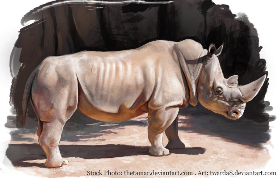 Rhino - Photo Study