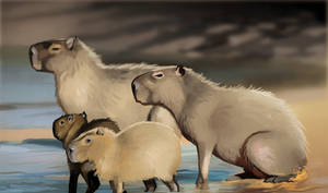 Photostudy 4: Capybara