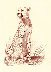 Cheetah by Comacold