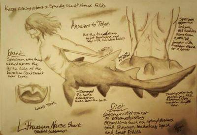 Lithuanian Nurse Shark (Mertalia Study) by Earthsuu