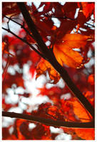 Red Red Red by kabbi