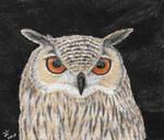 Eurasian eagle owl (Bubo bubo) by f2oche