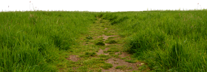 Grass Path 1