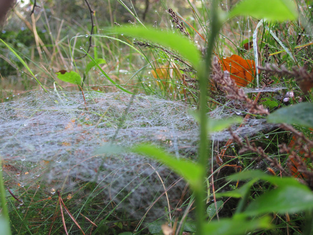 walking into spiderwebs essay Extended spider cognition  takes issue with this premise by extending the seat of cognition into the external environment,  if walking onto an orb-web,.