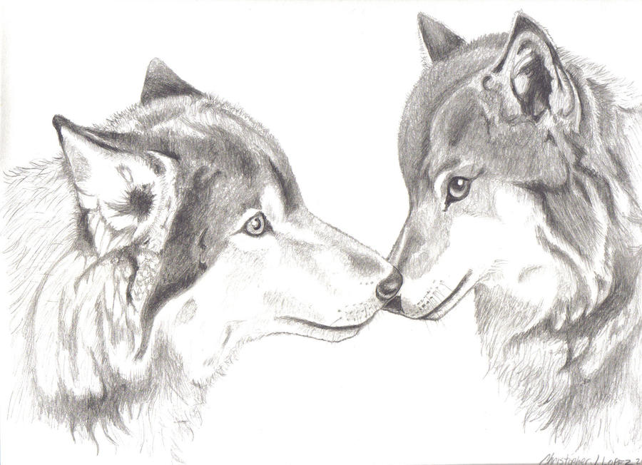 Wolf love drawing