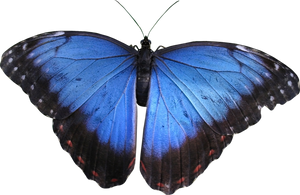 Butterfly PNG by heemipetal2004